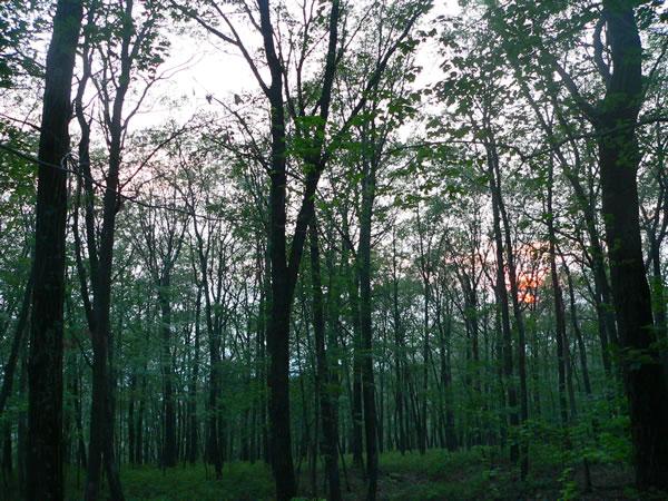 Western Pocono Area Pennsylvania Forested Lot Sale