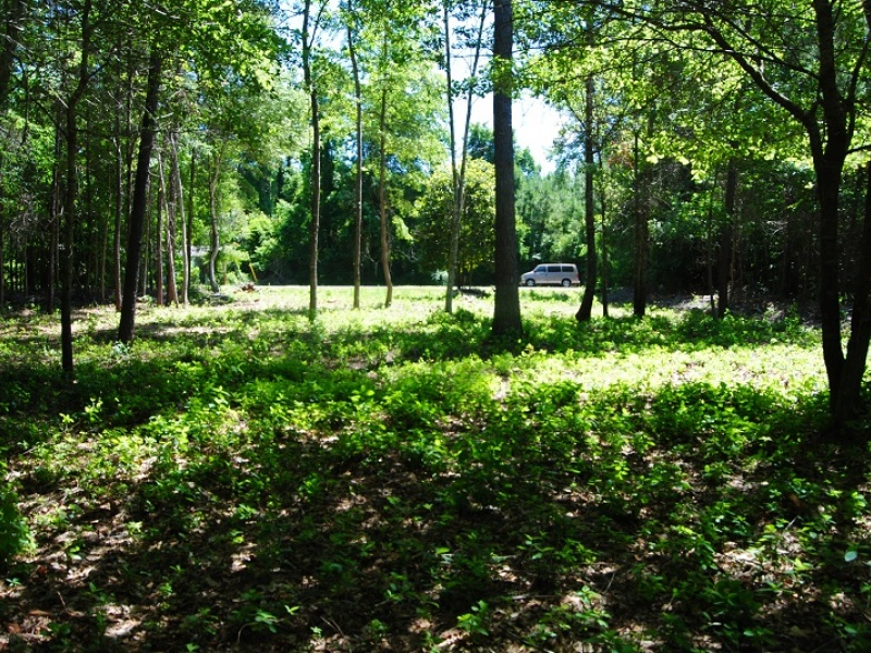 Lot 55 Sellers Rd,Conway,Horry,South Carolina,United States 29526,Vacant Lot,Sellers Rd,1151