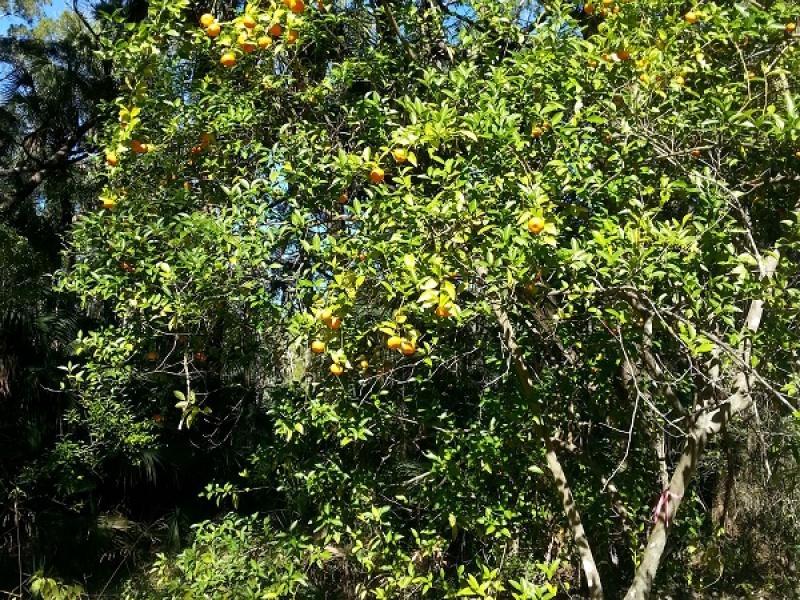 5881 S. Mason Rd.,Homosassa,Citrus,Florida,United States 34448,Acreage,S. Mason Rd.,1156