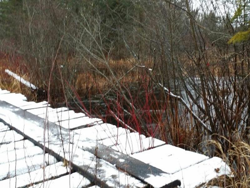 Black Creek Rd 3136,Rudyard,Chippewa,Michigan,United States 49780,Acreage,Black Creek Rd 3136,1222