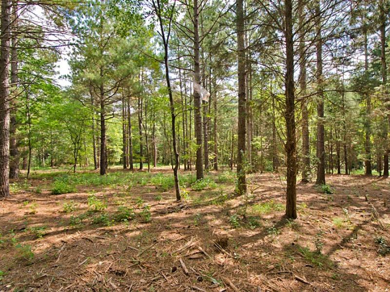 Thunder Mountain Rd,Efland,Orange,North Carolina,United States 27243,Acreage,Thunder Mountain Rd,1254