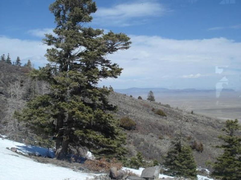 Tres Piedras,Rio Arriba,New Mexico,United States,Acreage,1338