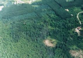 82862 Woodpecker Ln,Butternut,Ashland County,Wisconsin,United States 54514,Acreage,Woodpecker Ln,1402