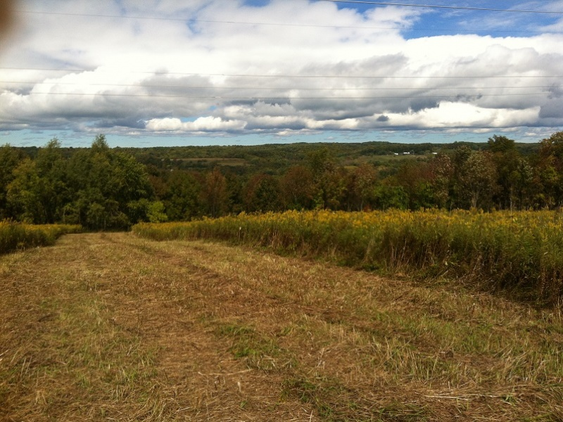 Rock Hill Rd,German Flatts,New York,United States 13407,Acreage,Rock Hill Rd,1456