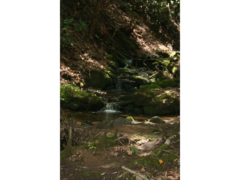 725 Jess Cove Rd,Fines Creek,Haywood,North Carolina,United States 28721,Land,Jess Cove Rd,1483