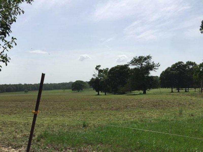 Hwy 441,Amite,St. Helena Parish,Louisiana,United States 70422,Acreage,Hwy 441,1524