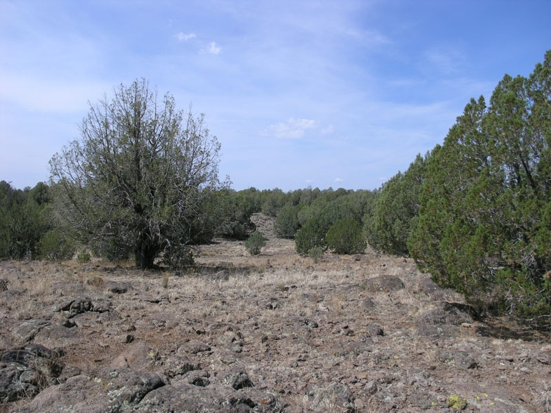 Honeysuckle Rd,Ash Fork,Yavapai County,Arizona,United States 86320,Acreage,Honeysuckle Rd,1594