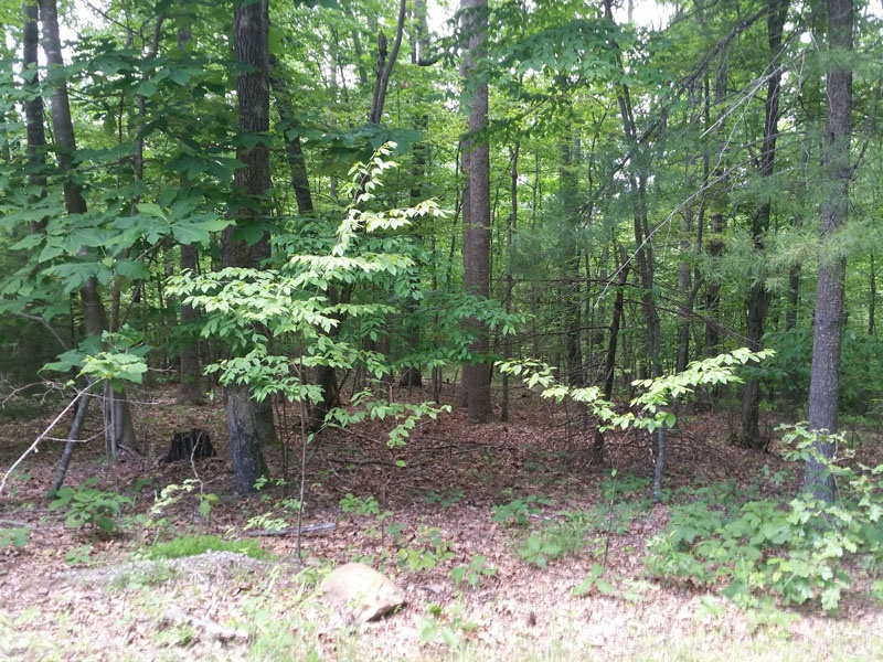 Lot 34 Forest Green Dr,Galax,Carroll County,Virginia,United States 24333,Vacant Lot,Forest Green Dr,1610