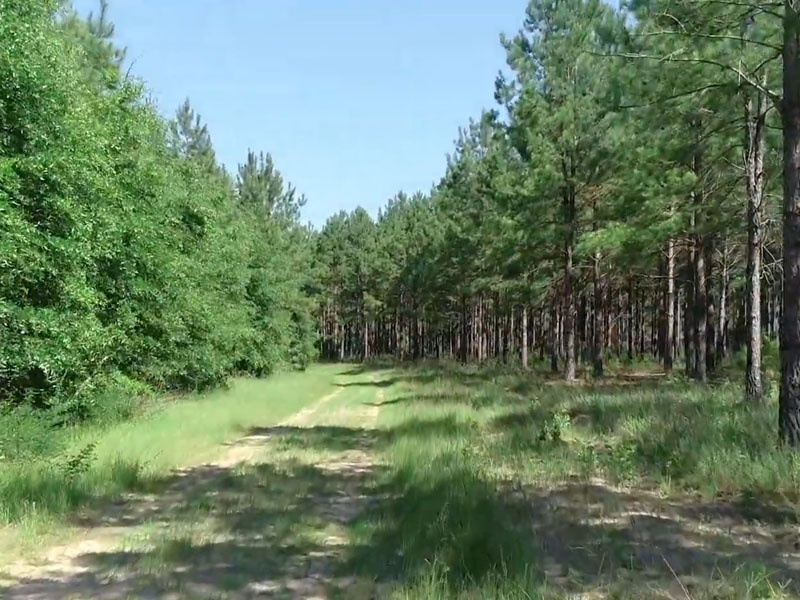 6565 E Centerpoint Rd,Parrott,Webster County,Georgia,United States 39877,Acreage,E Centerpoint Rd,1627