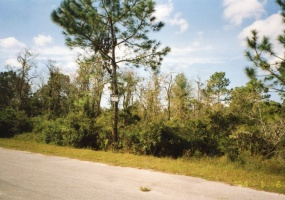 Crystal River,Citrus,Florida,United States 34428,Vacant Lot,1074